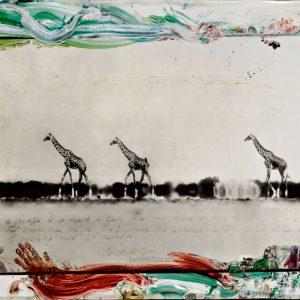 Contemporary Photographs