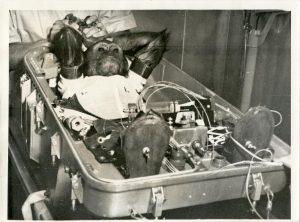 Vintage Historical Photograph Chimps Astronaut Space