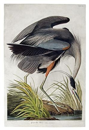 John James Audubon, Great Blue Heron, Plate CCXI, hand-colored aquatint and engraved plate from Birds of America, London, 1834. Estimate $40,000 to $60,000.