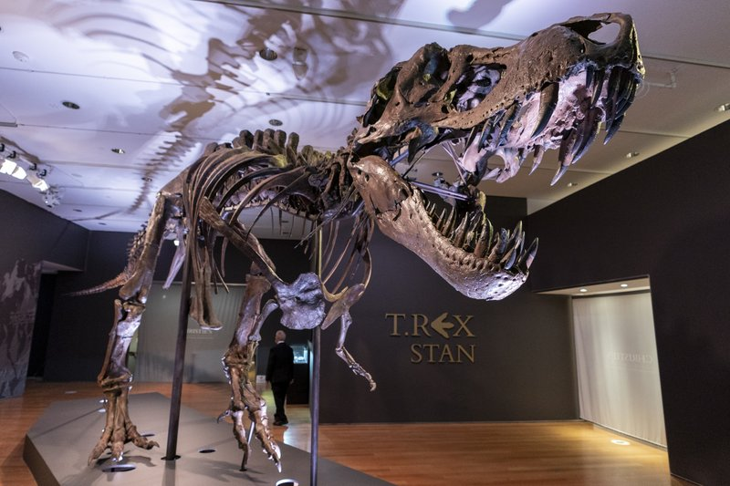 Stan, the T. Rex. Photo by the AP/Mary Altaffer.