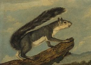Oil Painting by John Woodhouse Audubon Leads Maps & Atlases at Swann1