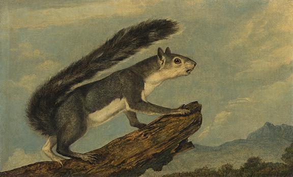John Woodhouse Audubon, California Gray Squierrel, oil on canvas, 1853. Estimate $30,000 to $50,000.