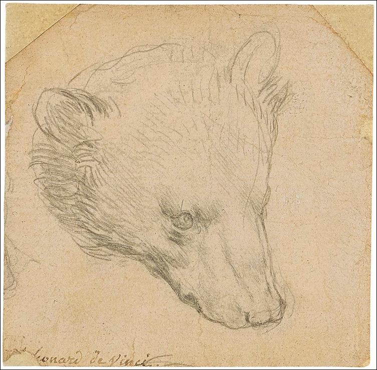 Leonardo da Vinci, Head of a Bear. Image from Christie's.