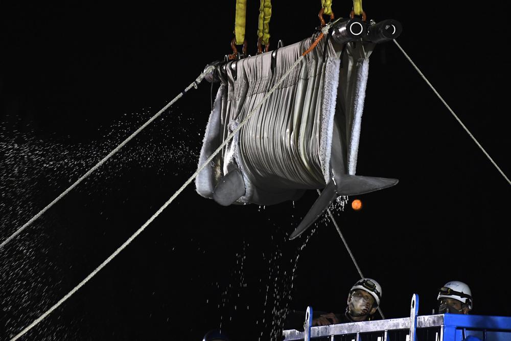 A beluga whale mid-transfer from Marineland to Mystic Aquarium. Image courtesy of AP Photo/ Jessica Hill.
